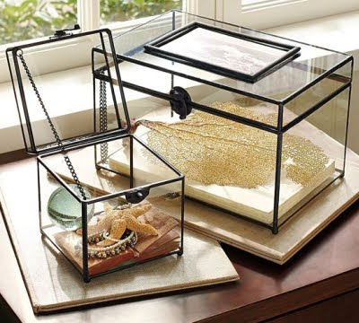 glass display box for sea treasures