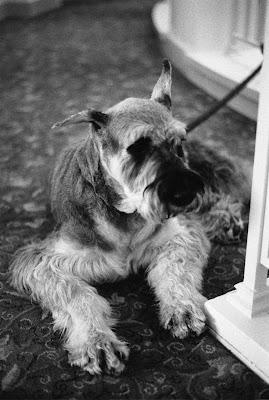 brookline dog grooming