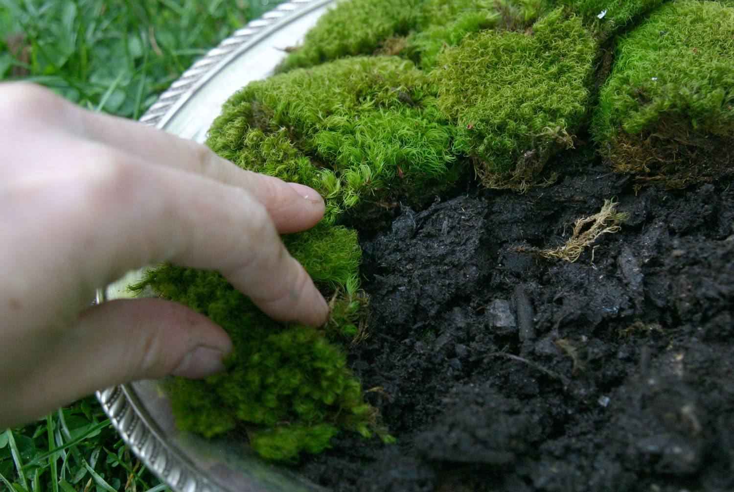 Plants That Don T Need Sunlight To Grow Moss Platter Tutorial