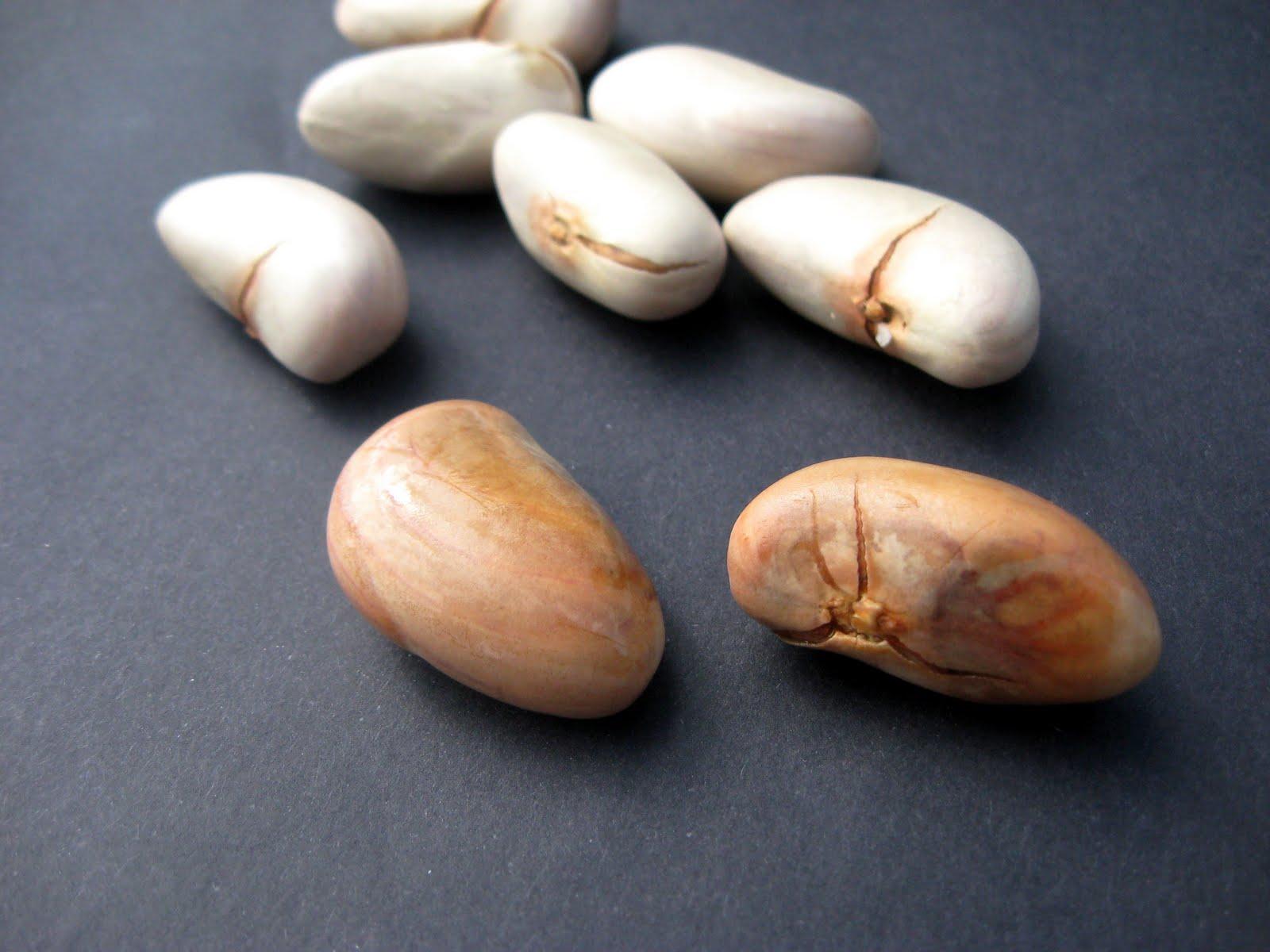 Taming Health Jackfruit Seeds And Honey