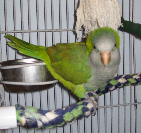 Parrots-R-4ever Avian Rescue and Sanctuary: You, Me, The Law and