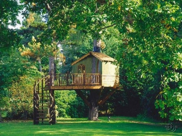 Creative Tree House Ideas Around The World