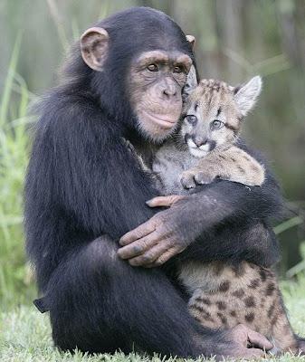 gambar hewan lucu, gambar binatang lucu, imut