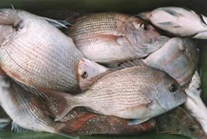 2891b85f20a3 Seychelles food sensations  Seychelles fish curry