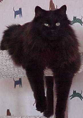 Mews Amp Views Happy Black Cat Day I Mean Happy Halloween