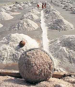 Sambhar Salt lake Rajasthan