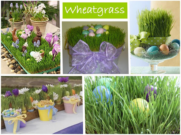 Everyday Art Grow Wheatgrass