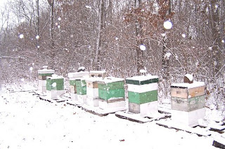 Hives in the winter