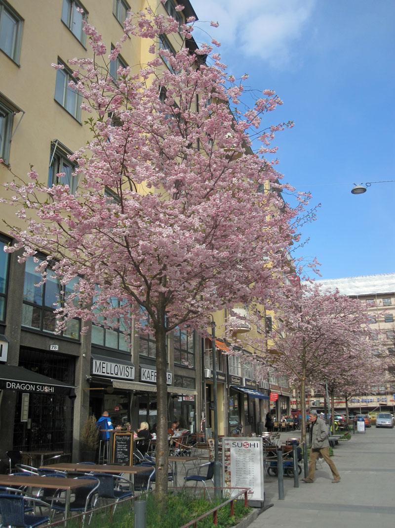 Resultado de imagem para Bysistorget, Stockholm