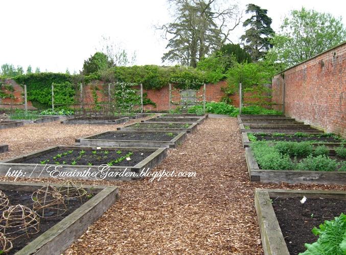 Narrow Raised Vegetable Garden