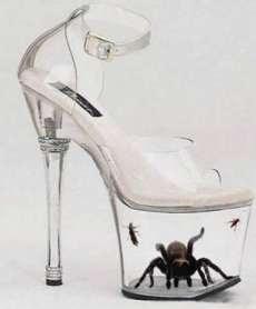 Tarantula in Freaky Shoes