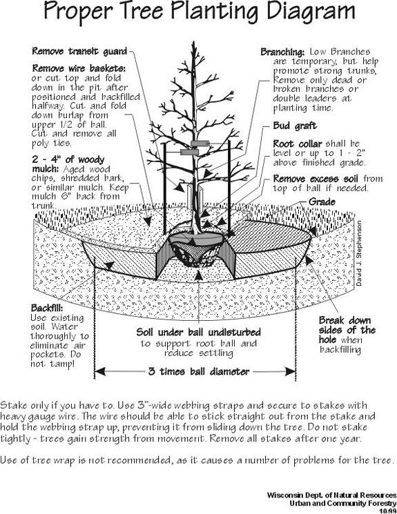 TREE PLANTING: Tree Planting Proceedures