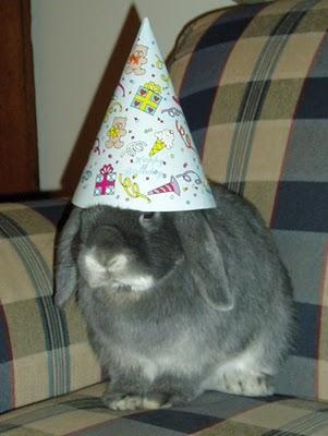 http://2.bp.blogspot.com/_rWv20AgRpfQ/TU2OTqbmWhI/AAAAAAAAFFQ/KIXL70DWFnc/s640/bunny+1.jpg