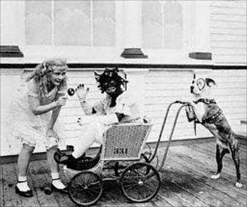 The Nanny Dog: The Nanny Dog Myth Revealed