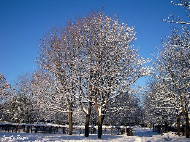 snow covered tree belgrave park dublin ireland 2010