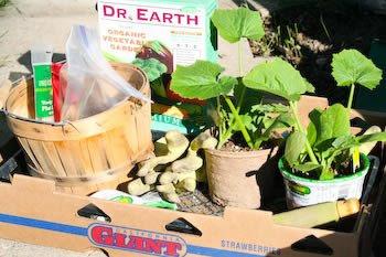 Planting tray for vegetable garden