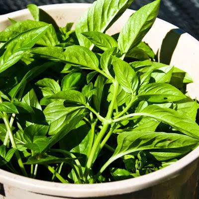 basil leaves in bucket