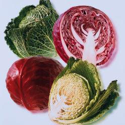 Lahana Diyeti,lahana salatası,lahana çorbası,lahana dolması