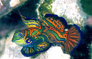 Aqua Marine: What do I need to start a saltwater aquarium?