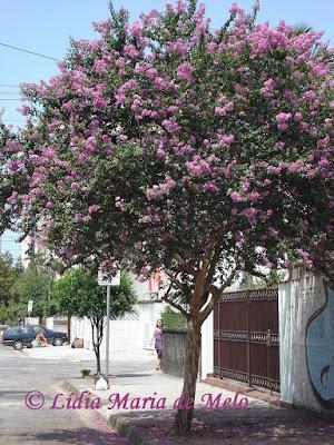 Blog da Ldia Maria de Melo  Presentes da natureza