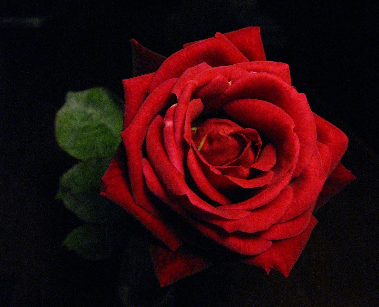 Flores Y Palabras: Abril 2010