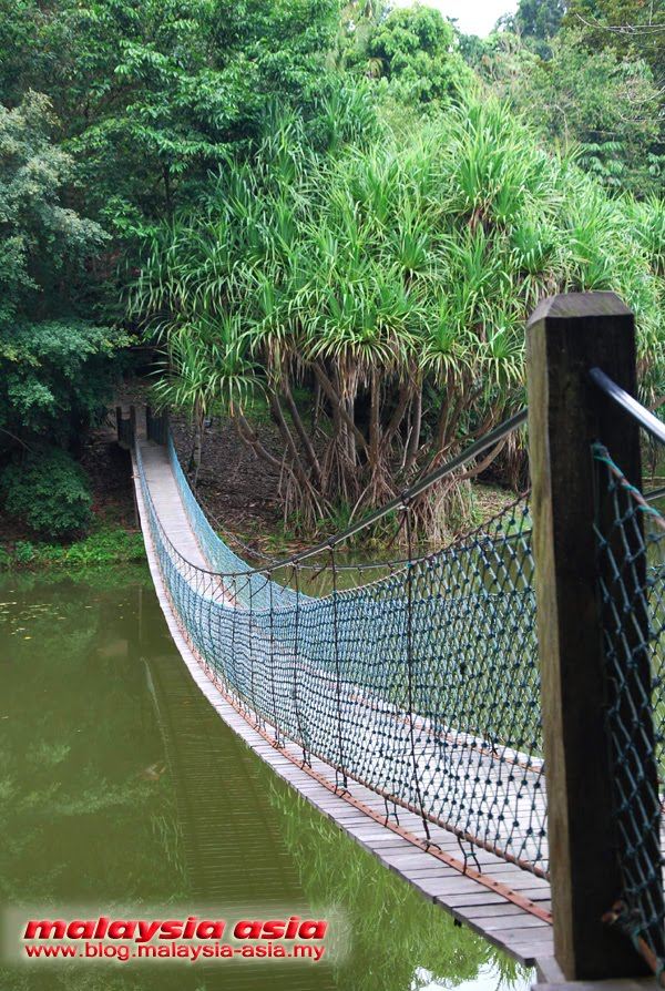 Bridge at Rainforest Discovery Centre Sabah