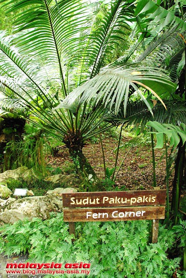 Fern Corner RDC