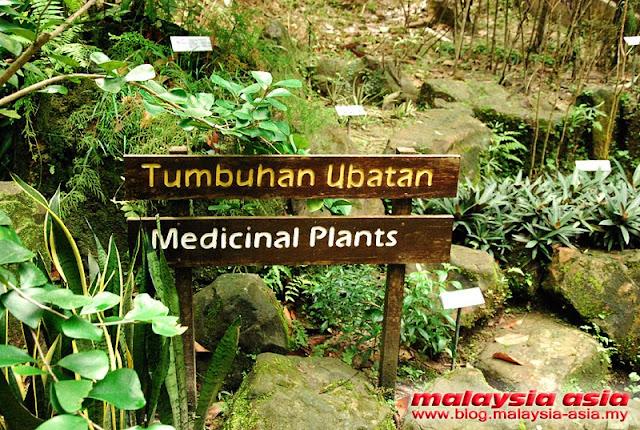 RDC Medicinal Plant Garden