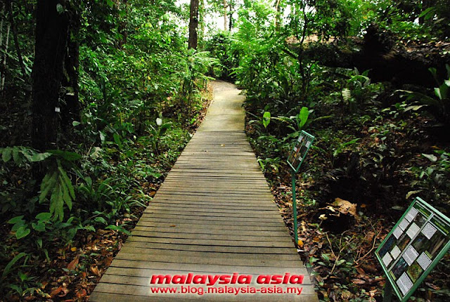 Wooden Walkway Rainforest Discovery Centre