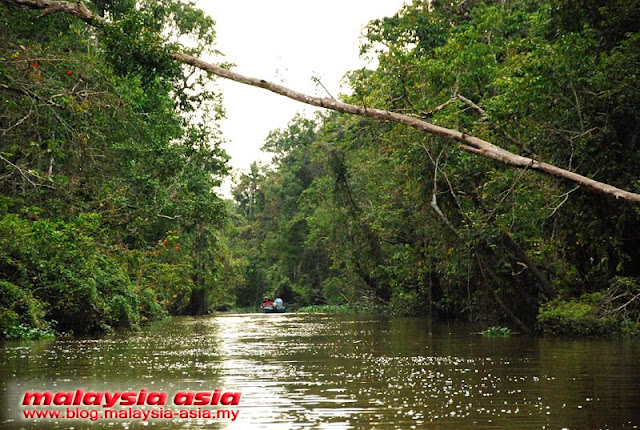 Photo of Kinabatangan River