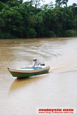 Kinabatangan River Sukau
