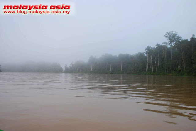 Kinabatangan River in the morning