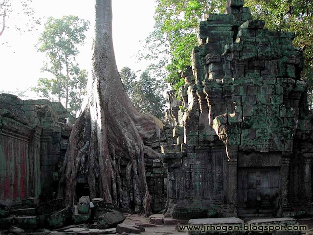 Trees growing on Ta Prohm Temple
