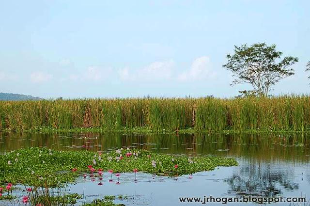 View at Bon Ton Resort