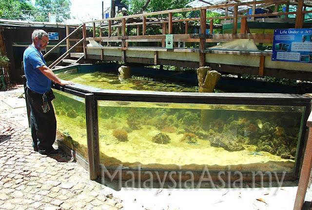 Sabah Open Coral Tank