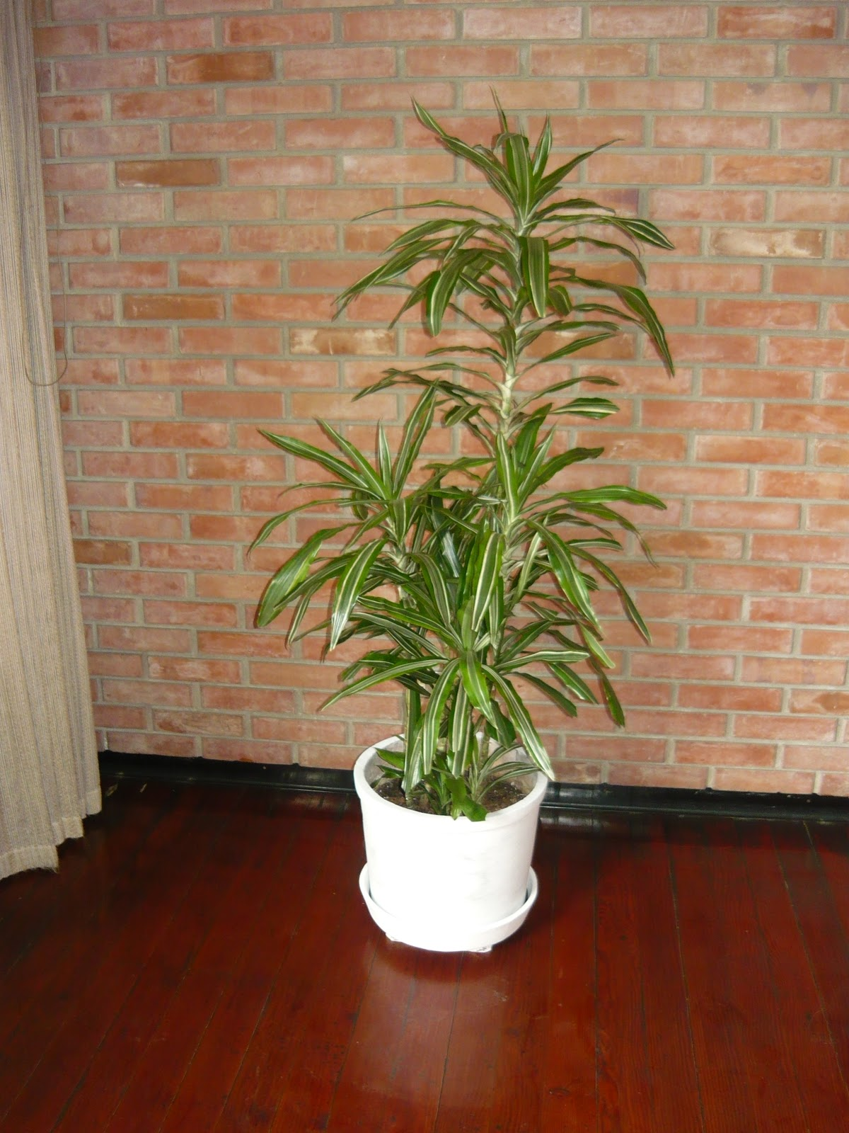 Plantas de interior macetas grandes for Plantas decorativas para interiores