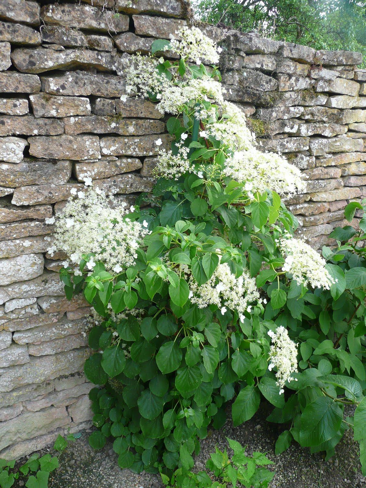 notre jardin secret geranium pivoine et hydrangea. Black Bedroom Furniture Sets. Home Design Ideas