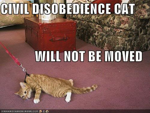 Civil Disobedience meaning?