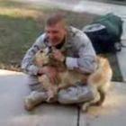 A recepção dos cachorros aos soldados