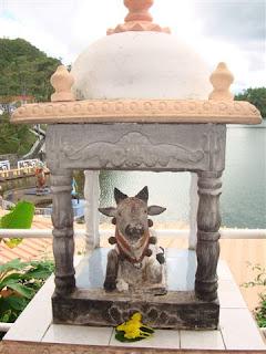 A vaca é sagrada na Índia