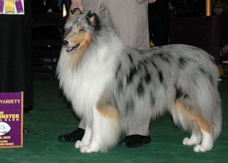 DOG SHOW POOP: 2009-03-01