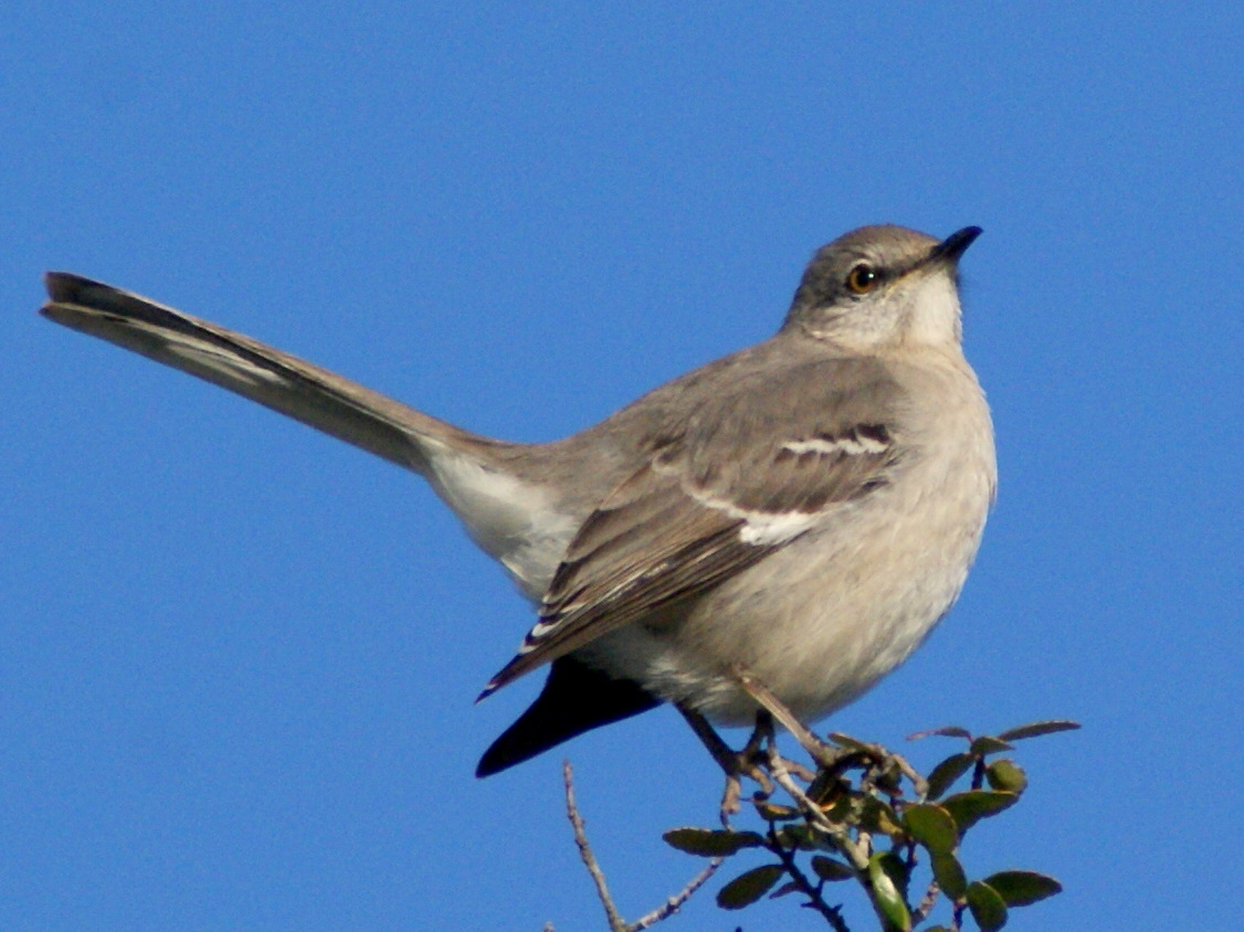 Se Texas Birding Amp Wildlife Watching Let Us Now Praise