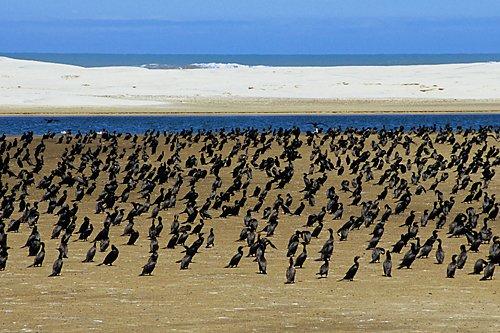 Parque Nacional da Lagoa do Peixe