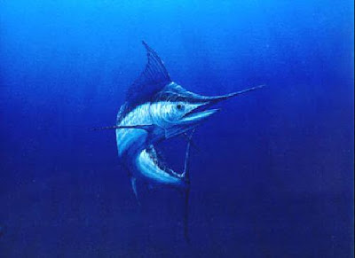 Pesca no Brasil