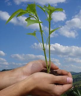Ecologia: Os dez mandamentos da Ecologia