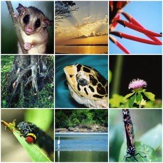 Biodiversidade Brasileira e do Bioma Pampa