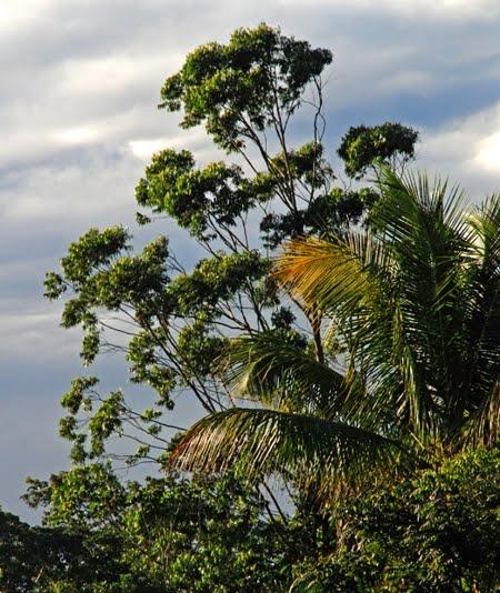 Floresta Nacional de Goytacazes | Espírito Santo