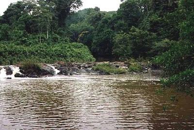 Floresta Nacional de Humaitá | Amazonas
