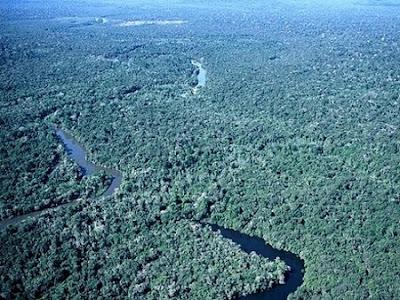 Floresta Nacional de Jatuarana | Amazonas