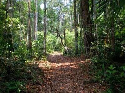 Floresta Nacional de Pau-Rosa | Amazonas